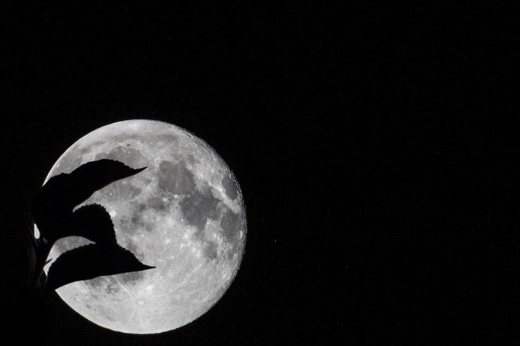lourymage - La Lune