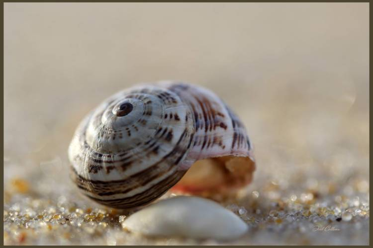 lourymage - Escargot
