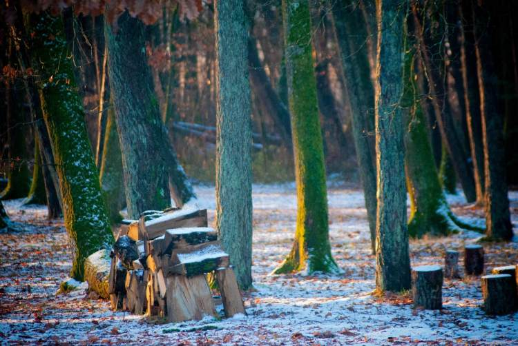 lourymage - bois de l'Hermitage